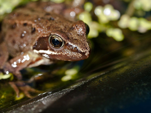 1000/827: 26 May 2012: Froggy by nmonckton