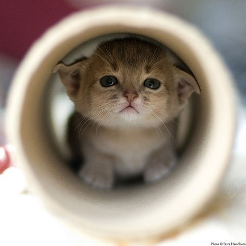 cat in a tube