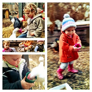 Wednesday was farm day. We all loved it. #farm #chicken #balnarring #outing