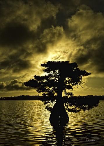 Lake Istokpoga - Tree On Fire by stan hope