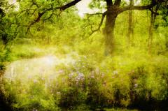 [フリー画像素材] 自然風景, 森林, 緑色・グリーン ID:201206110600