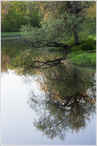 morning reflection tree water river landscape estonia kabala sailsevenseas vigalariver