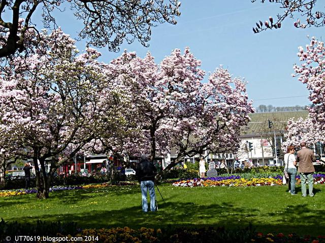 magnoliengarten_mit_fotografen