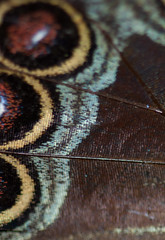 Scales on a butterfly's wings