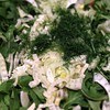 Fennel arugula mint salad with lemon dressing to celebrate the fleeting arrival of spring in NYC. Eat #realfood #fennel #arugula #mint #lemon #salad #delicious