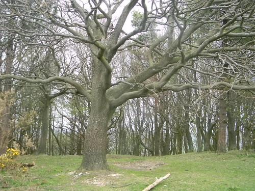 Trees at Black Cap