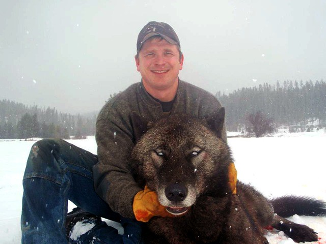Idaho fish and game report says trapped black wolf not for Black wolf fish