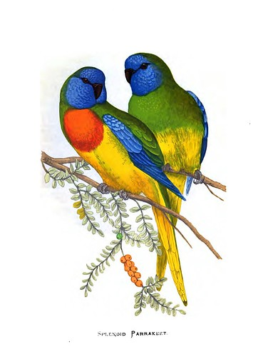 008-Parrots in captivity-1884- William Thomas Greene