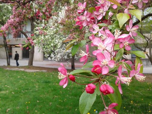 University of Guelph in bloom by scosborne