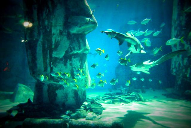 Sea Life London Aquarium Explore Gitlygrocki 39 S Photos