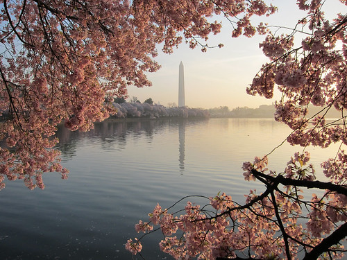 Another Beautiful Sunrise On The Tidal Basin