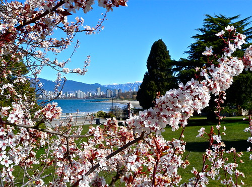 Cherry Blossom Festival - Vancouver 2012