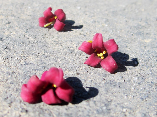 Small Fallen Blossoms