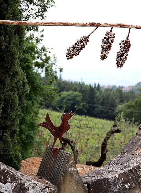Castellare di Castellina 酒莊。San Gimignano-110527