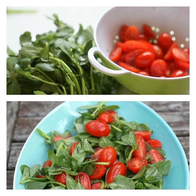 tomato purselane salad