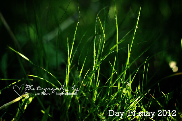 Photo a day May 14, 2012