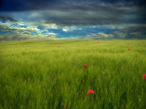 italy field landscape countryside italia day cloudy friuli barle poppiesw count4ry