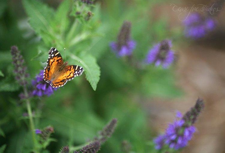 05-16-butterfly2