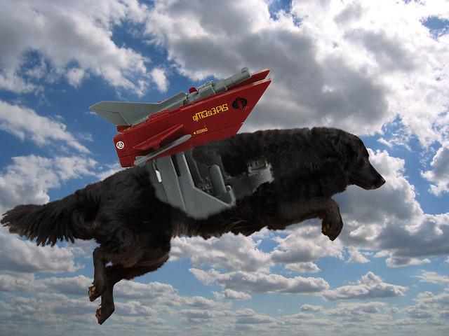 dahlia-jetpack