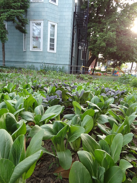 Three Part Harmony Farm plot at the Dorothy Day Catholic Worker House
