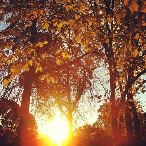 #trees #sundayart
