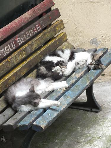 Párban alvás