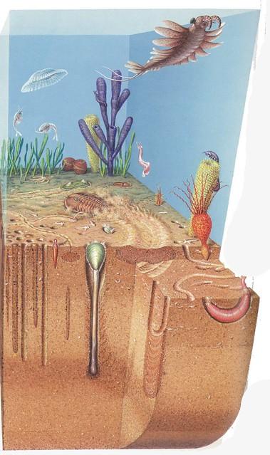 cactus worm right