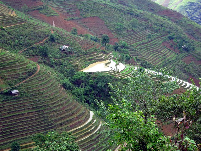 Terraced Hillside