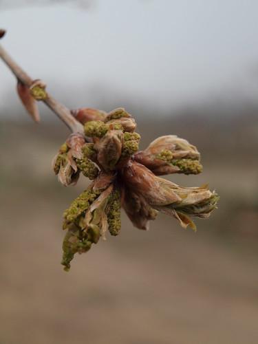 Promessas de Primavera #1 by MauFeitio