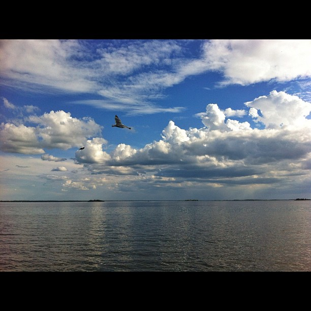 Flying over..., St. Lawrence river, near Buttonville, Ontario #seaguls #birds #nature #ontario #landscape #canada #snapseed #iphone4 #sky #clouds #water