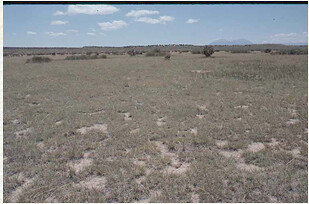 Blue grama dominated shortgrass prairie in extreme drought conditions