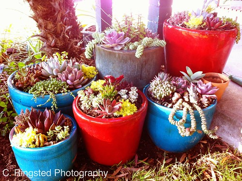 DIY: Potted Succulent Garden by Sanctuary-Studio