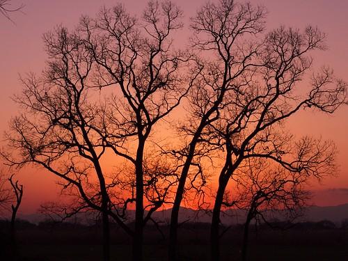 sunset sky tree silhouette arakawa ageo dmcg1