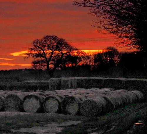 sunset treesilhouette bales nottinghamshire goldenhour eveninglight beautifulsunset robinhoodway bothamsall ilobsterit thelastflourish