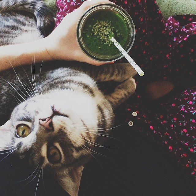 Post-work revitalization: pj pants, kitty on lap, and a greens smoothie experiment. Kale, cucumber, green grapes & apple, lemon, ginger, pineapple, coconut water. Working on it.