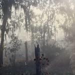 Tree Frog Farm