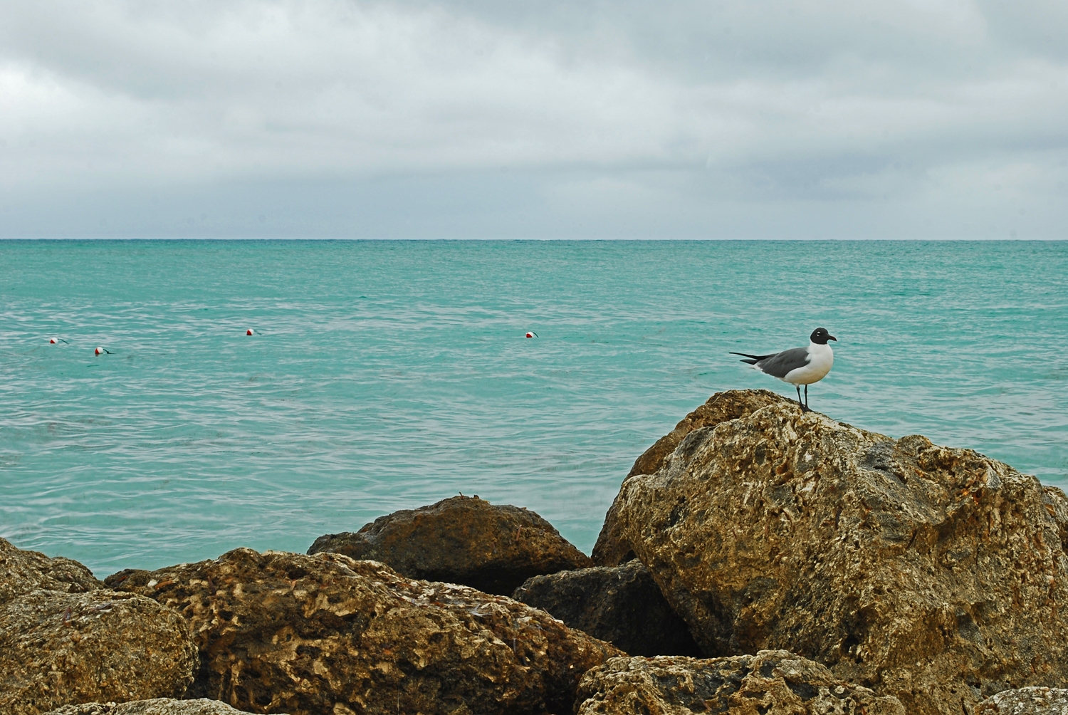 Bahamas, Beach, Seagull, Water