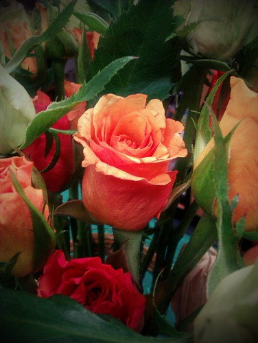 82/366: Flower
