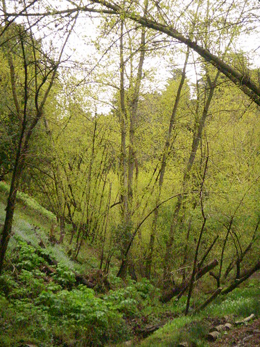 Cottonwood Canyon in a Beautiful Spring Rain. Saturday, March 31, 2012.