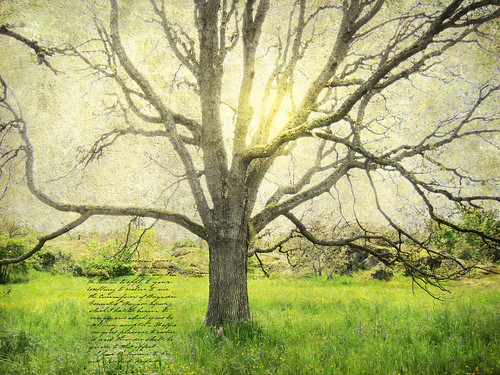 If you reveal your secrets to the wind you should not blame the wind for revealing them to the trees.