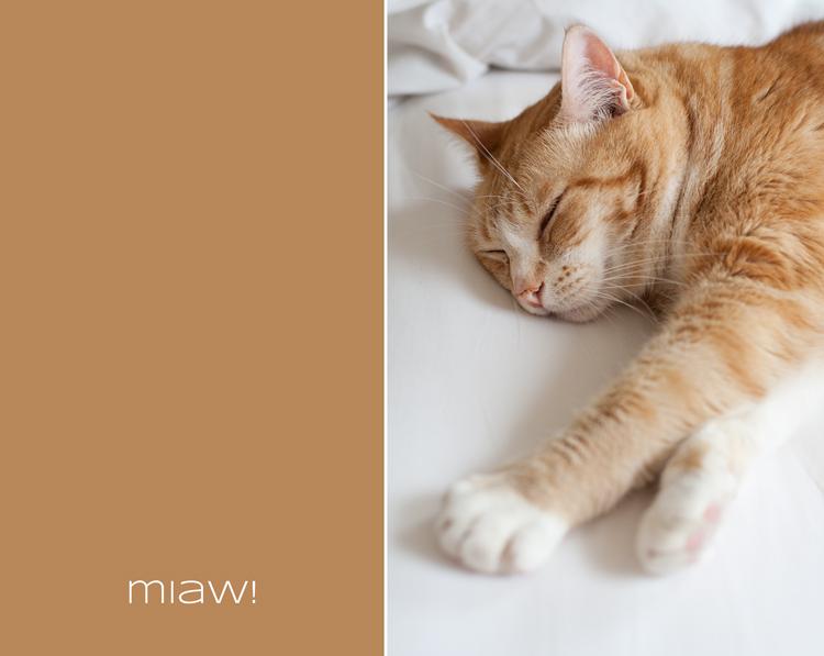 090823-Rayu-1-plano-duerme-cama-(2)-R3-BLOG
