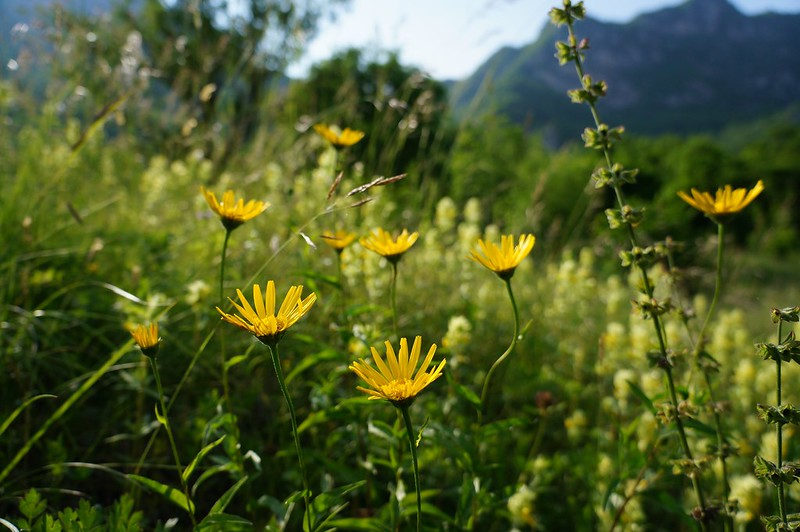 Wildflowers and mountains