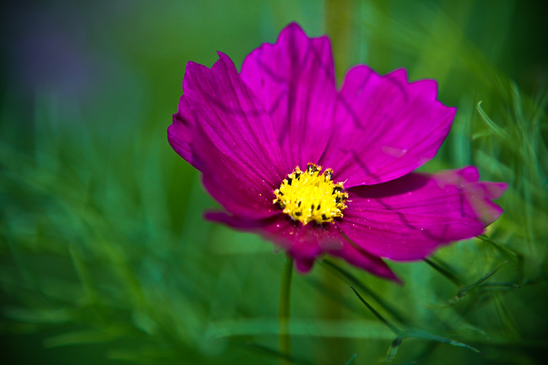120607 Wildflower