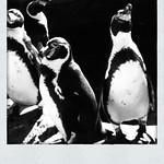 20120513 calgary zoo - 4