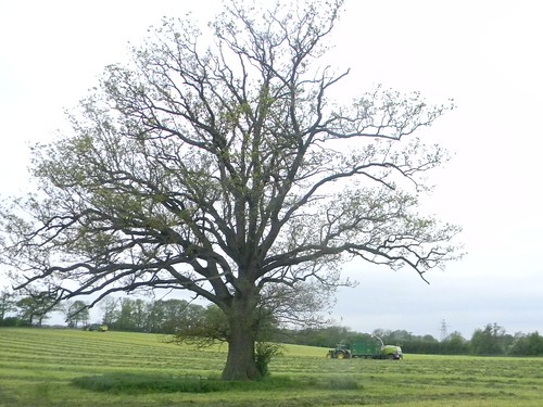 Tree in a field ...
