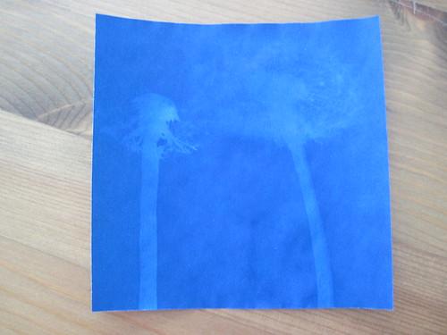Dandelion Fluff Sunprints
