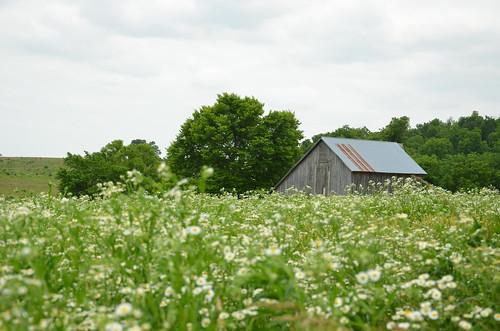 beautiful field barn rural landscape farm barns scenic mo missouri fields farms wildflowers ozarks historicsite ashgrove statehistoricsite nathanboone