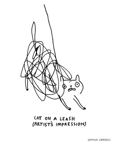 cat on a lead (leash)