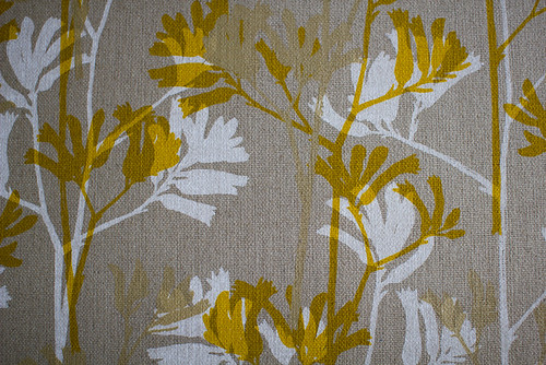 Kangaroo Paw in Mustard & Soft Gold