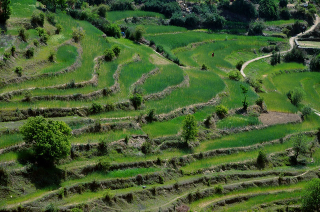 Terrace farming explore anshuldabral 39 s photos on flickr for Terrace cultivation